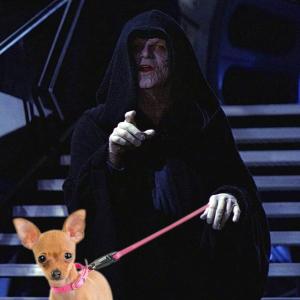 Emperor Dog