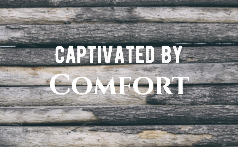 Captivated By Comfort